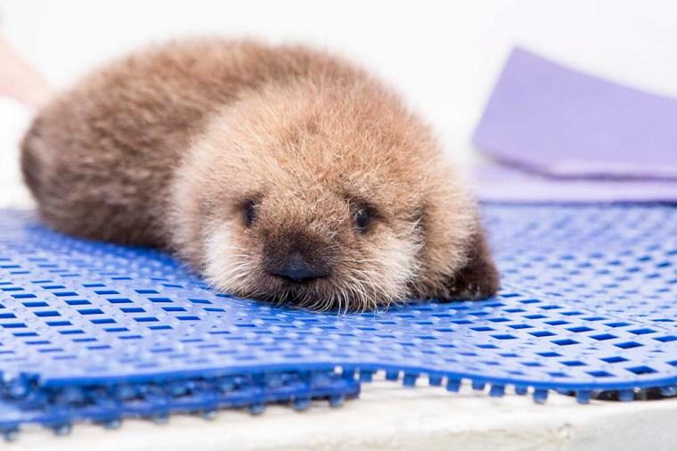Luna Sea Otter Oct 2014