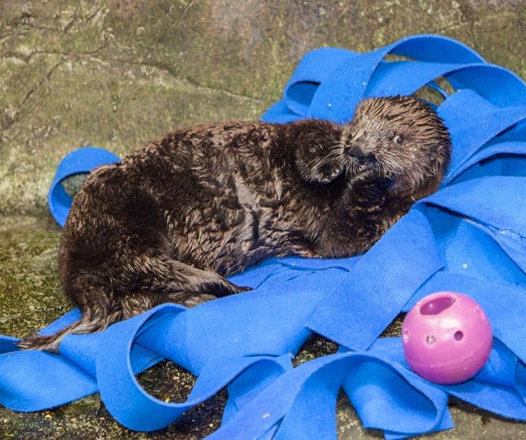 Luna Sea Otter