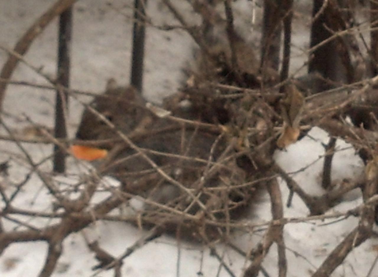 Squirrel Feb 24 2015