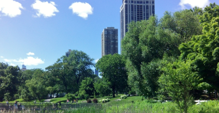 Lincoln Park Summer 2014