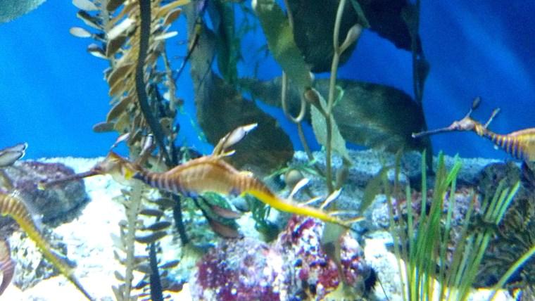 Dragonfish ATP Oct 2015