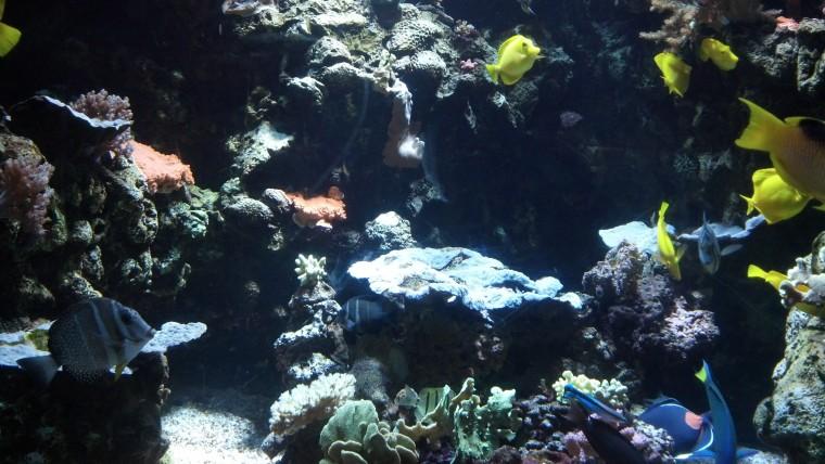 Fish Tank ATP Oct 2015