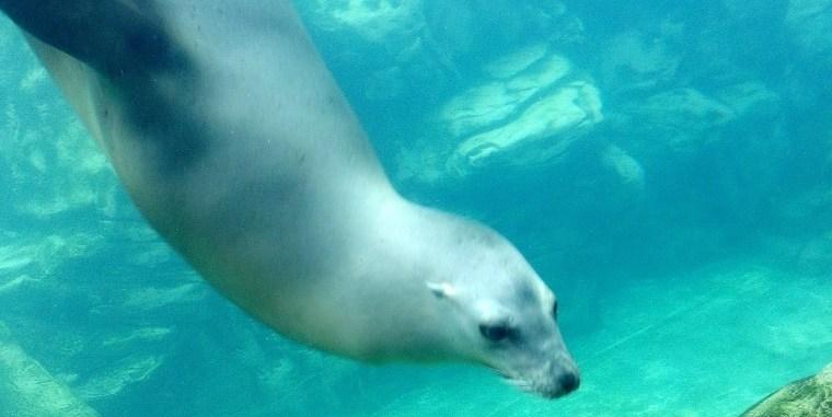 Seal ATP Oct 2015