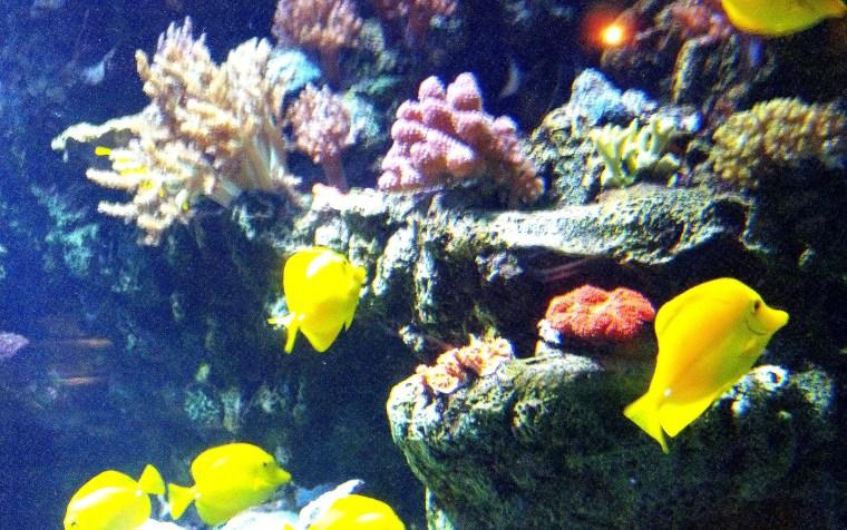Yellow Fish ATP Oct 2015