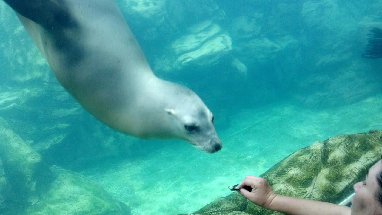 Seal Aquarium of the Pacific