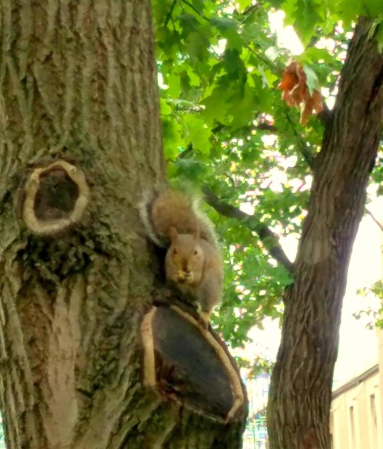squirrel-oct-3-2016