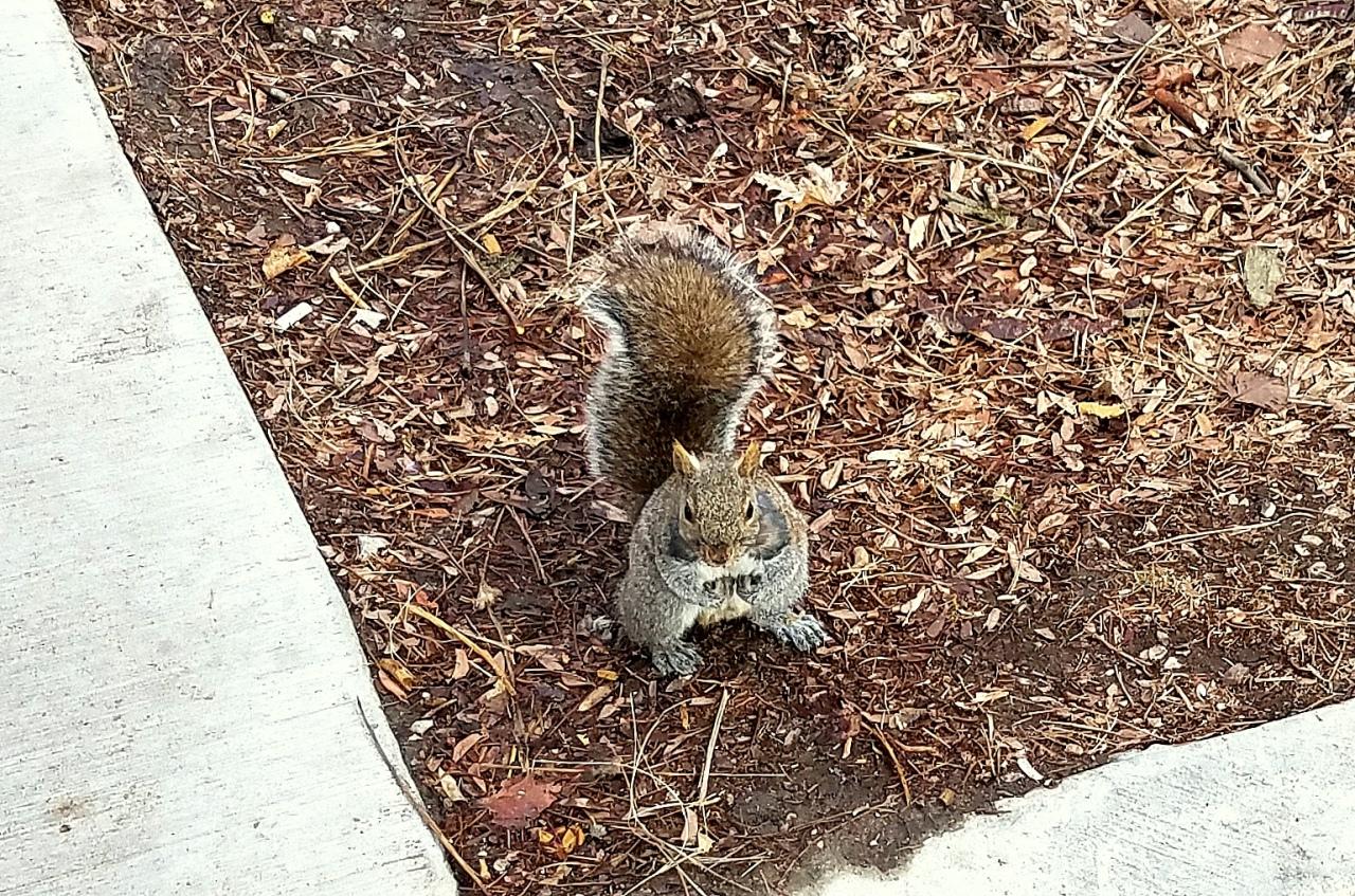 squirrel-feb-21-2017