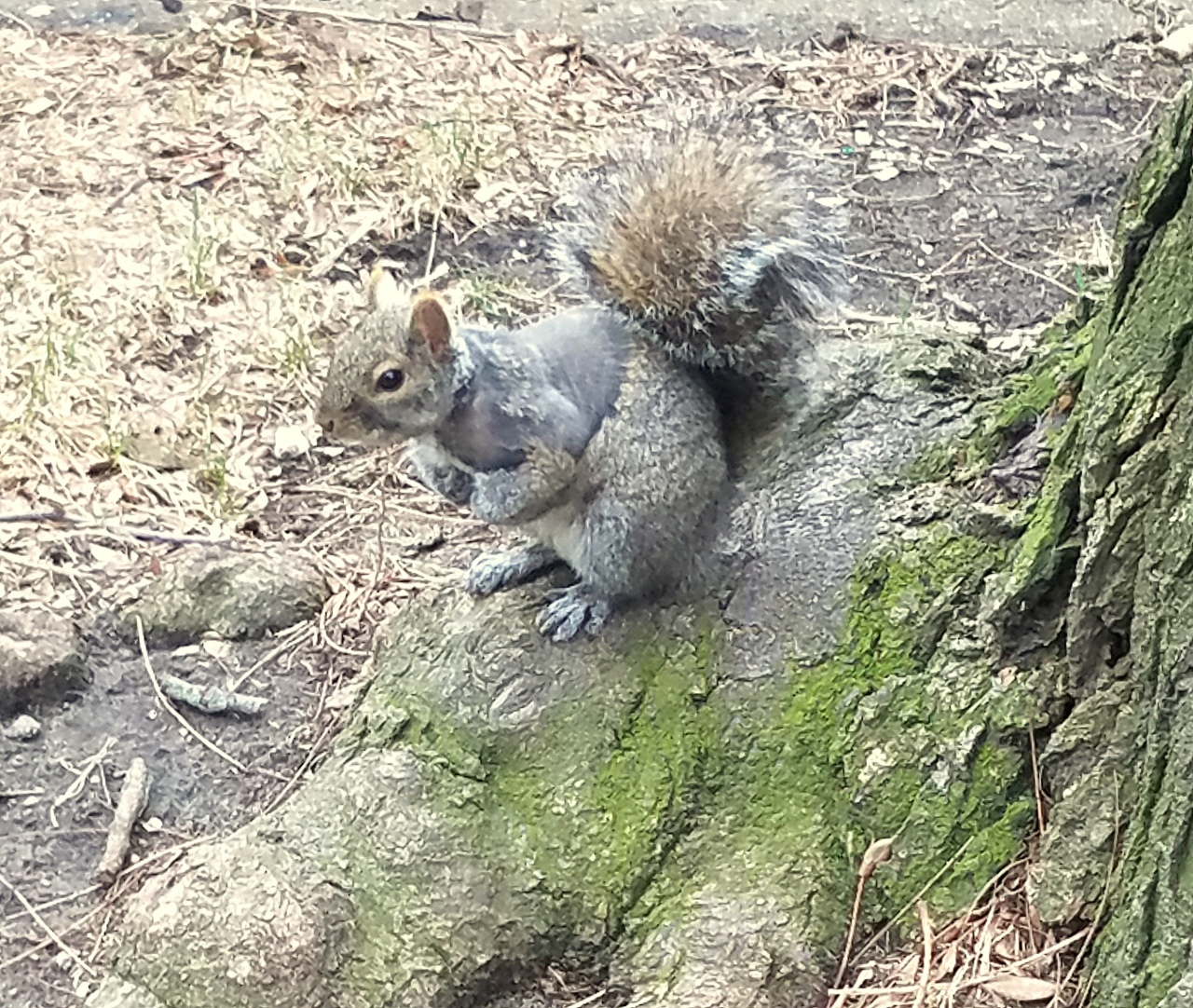 squirrel-feb-28-2017