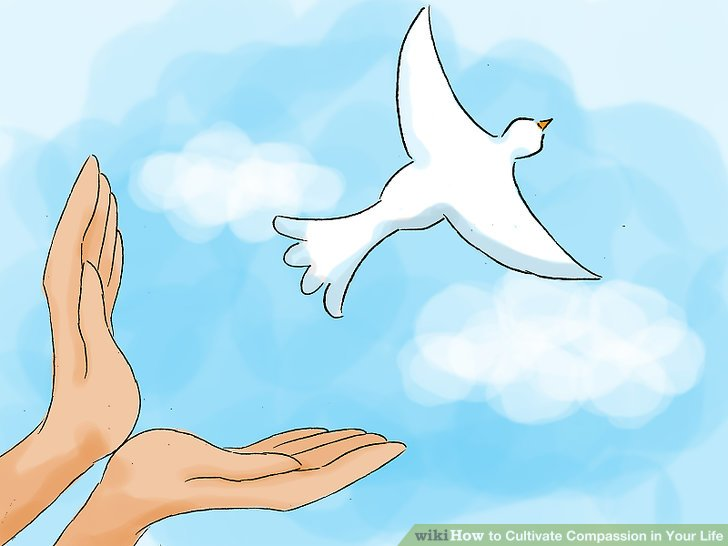 Compassion Dove Flying