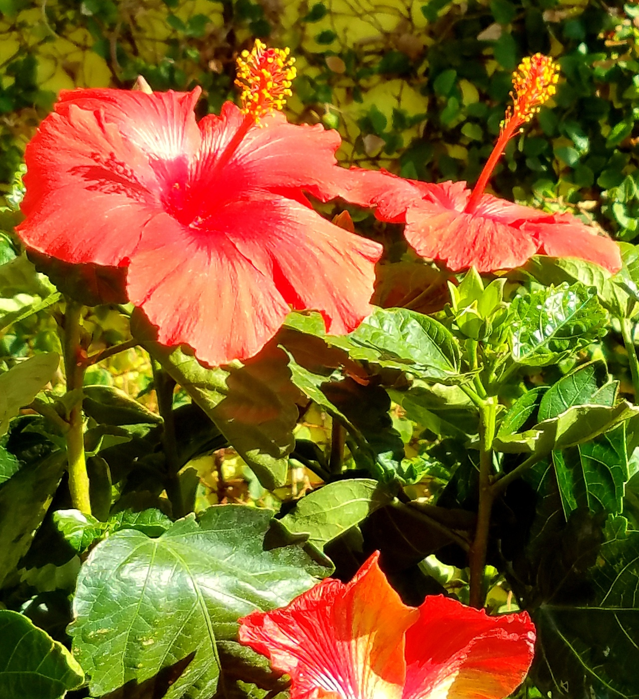 The friday file california flowers the chicago files i took this picture last month while in los angeles what struck me as interesting was the shadow the sun made of the little yellow anther i had to look izmirmasajfo