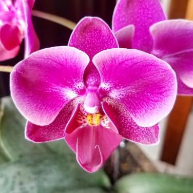 Orchid Blooms May 2018