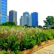 Lurie Gardens Downtown Chicago June 26, 2018 2